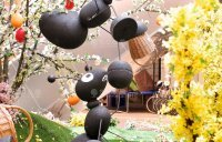 Весенние декорации, Černá Růže